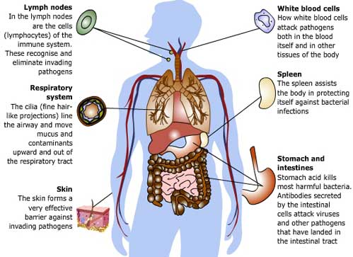Can you really boost your immune system