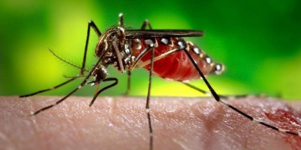 5 Home Remedies To Maintain Platelet Count During Dengue Fever